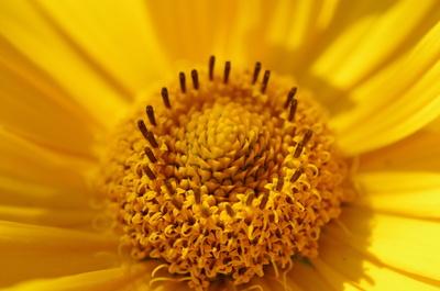alles Gelb